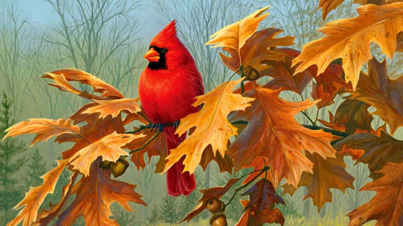 Cardinal Autumn Bird  Background