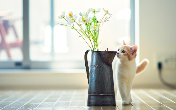 Cat Flower Vase Wallpaper