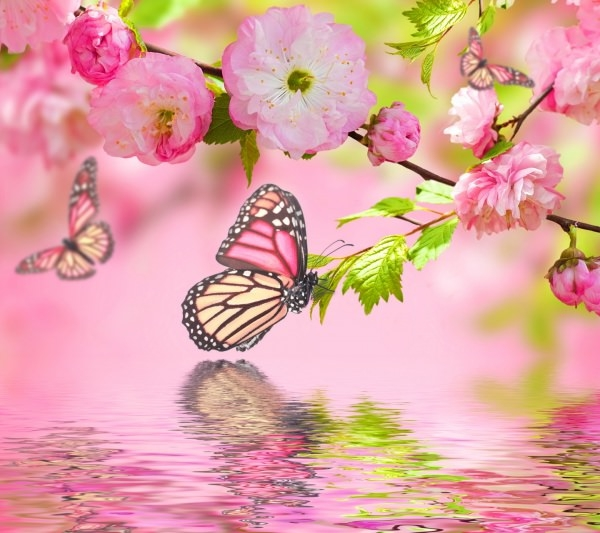 Cherry Blossom Butterfly background