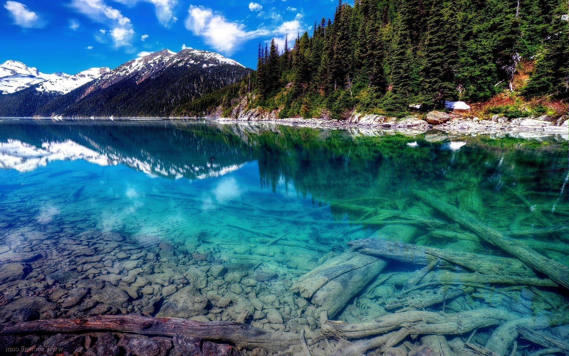 Clear Water Lake in Forest Wallpaper