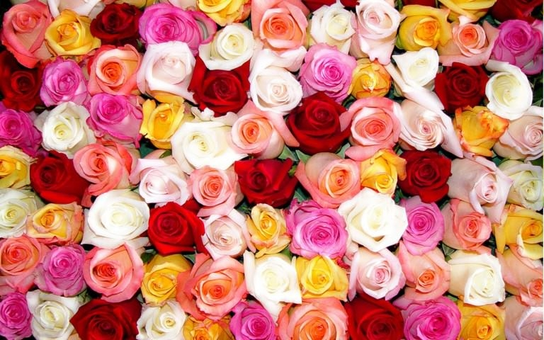 Colorful Rose Flowers Wallpaper