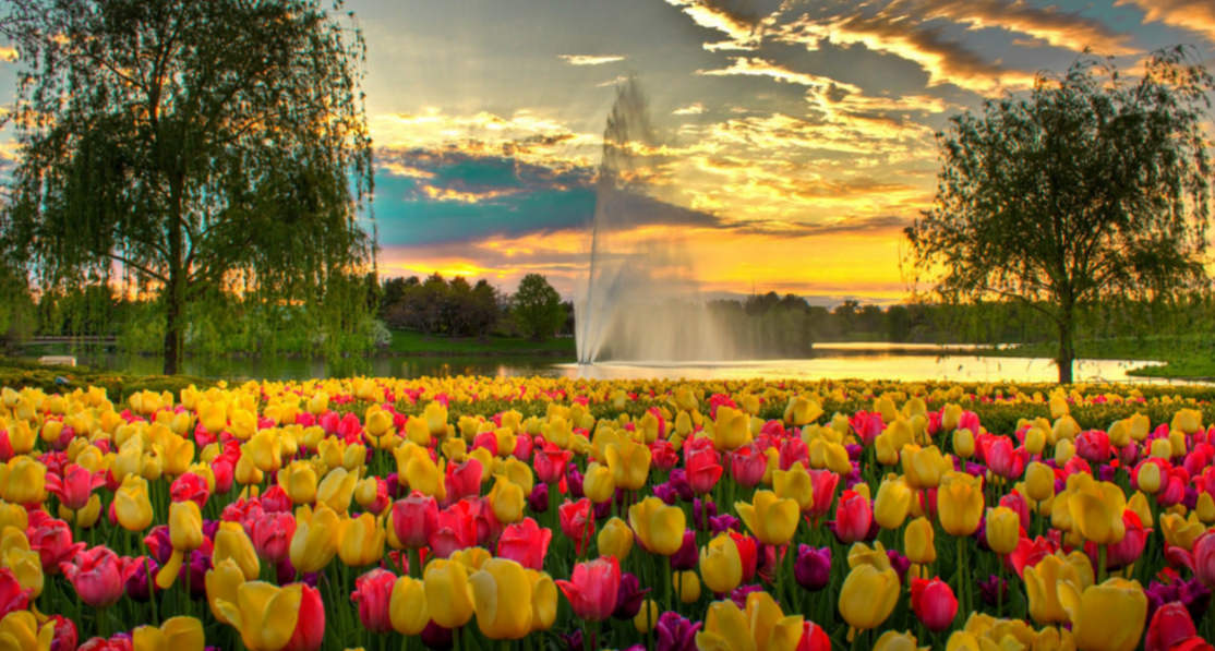 Colorful evening Spring Photography