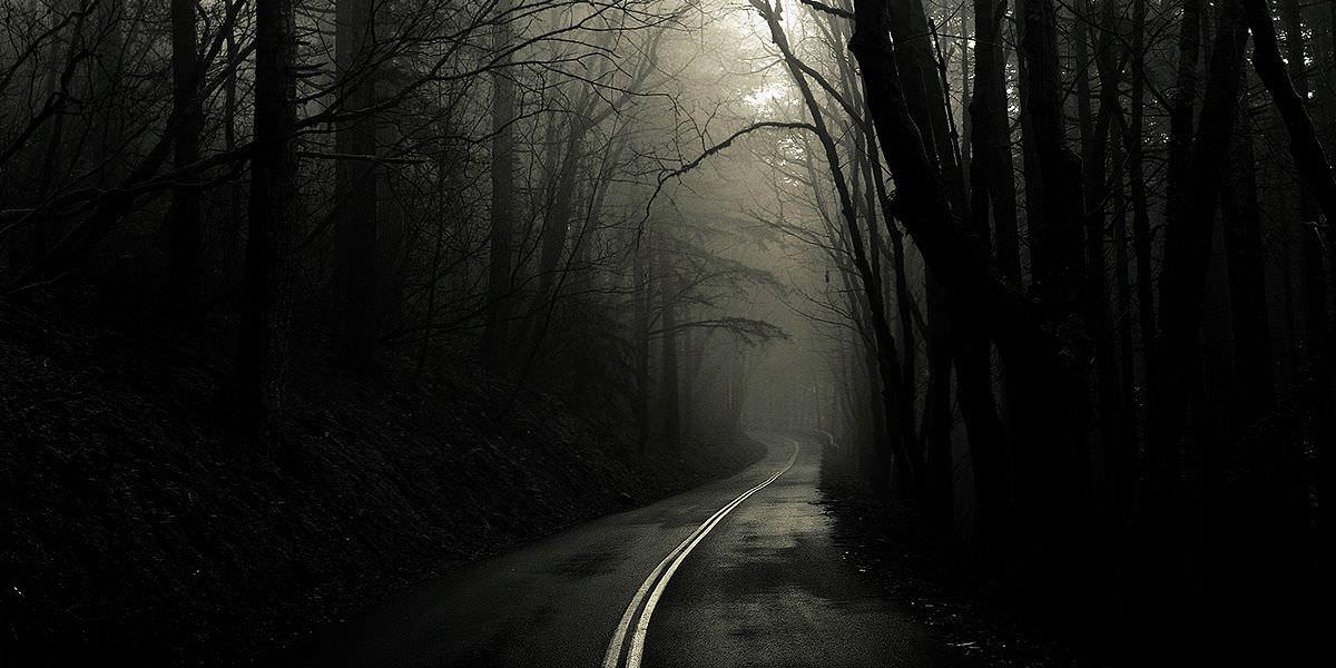 Creepy Forest Way Wallpaper