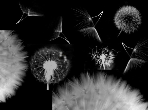 Dandelion Brushes For Free