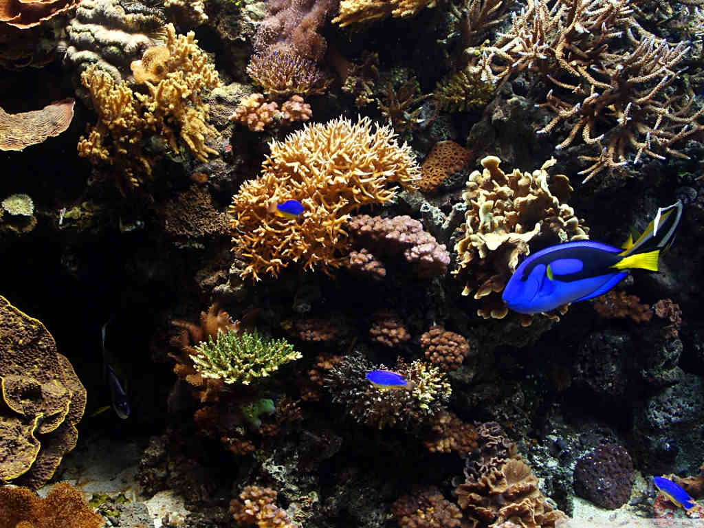 Download Aquarium Fish wallpaper