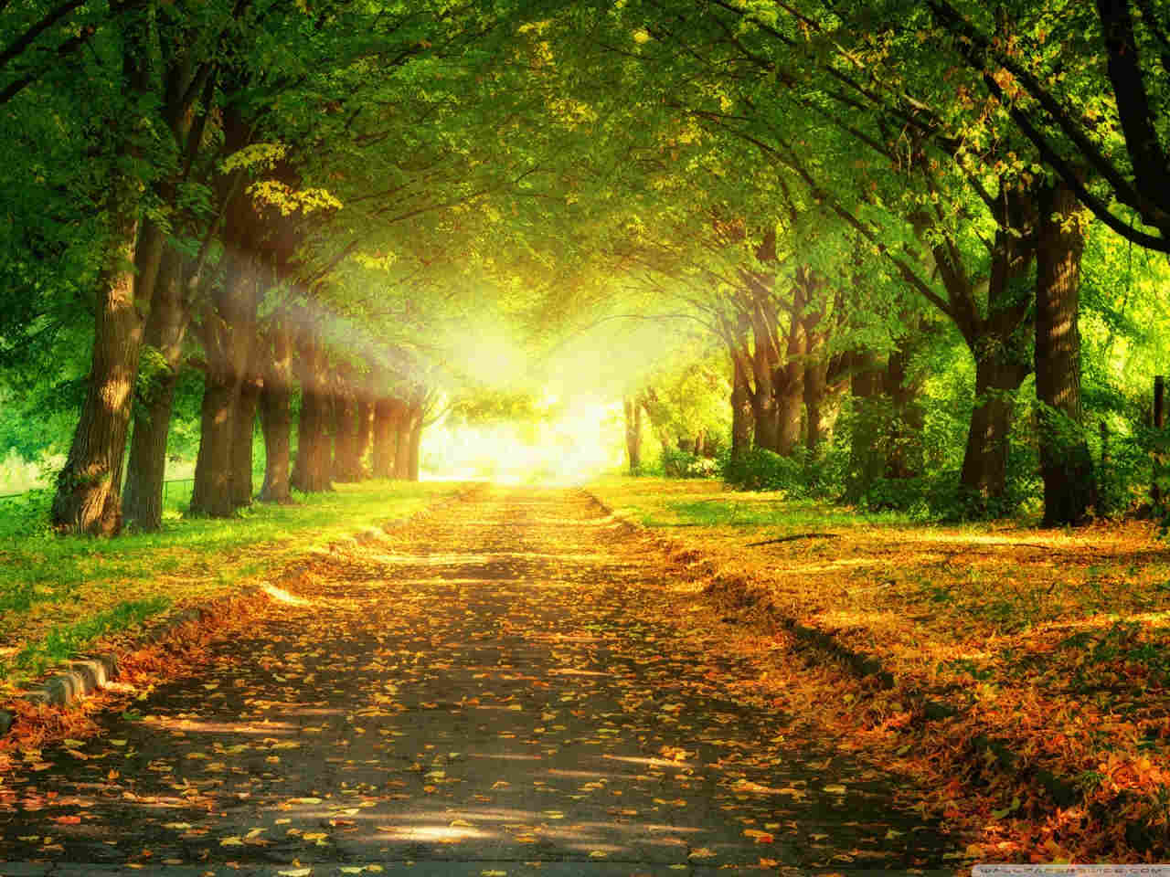 Download Autumn Path wallpaper