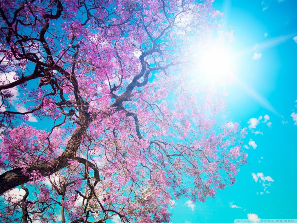 Download Spring Sunshine Wallpaper