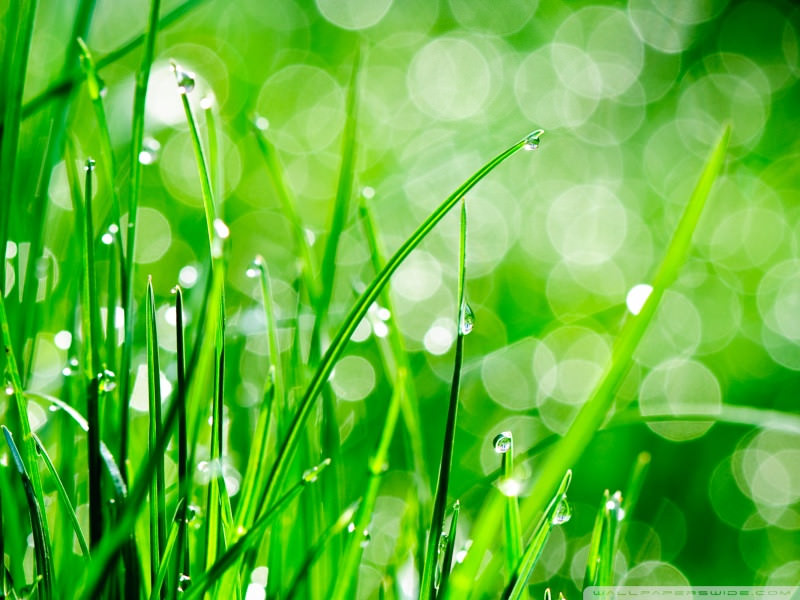Download Water Drops On Grass Wallpaper