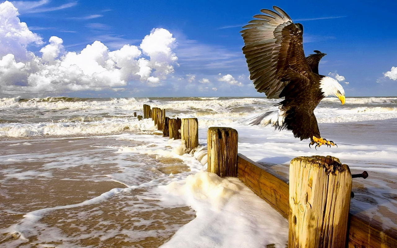 Eagle Bird Landing Wallpaper