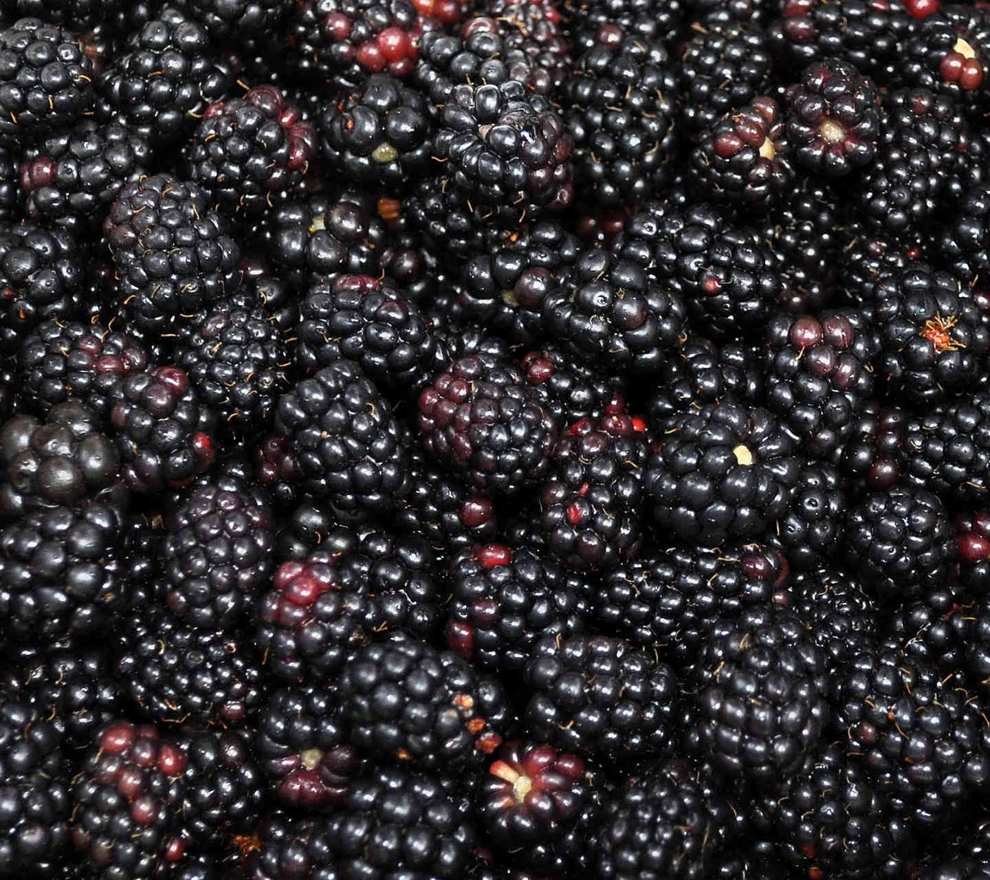 Elegant Blackberry Fruit Wallpaper