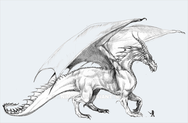 Fantastic Drawing of Dragon