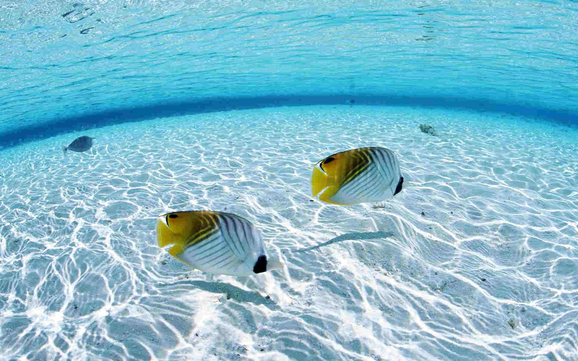 Fishes In Water Wallpaper