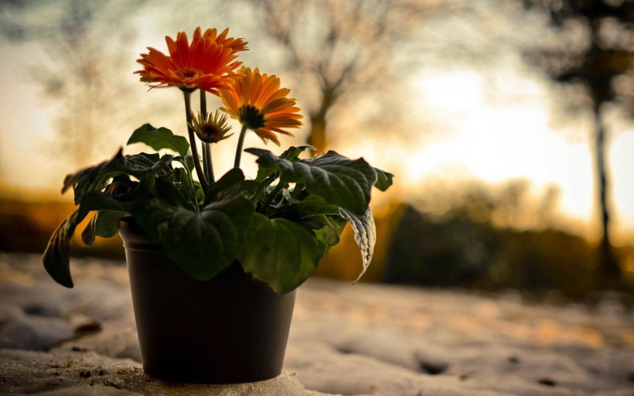 Flower Hills Shade Daisy Wallpaper