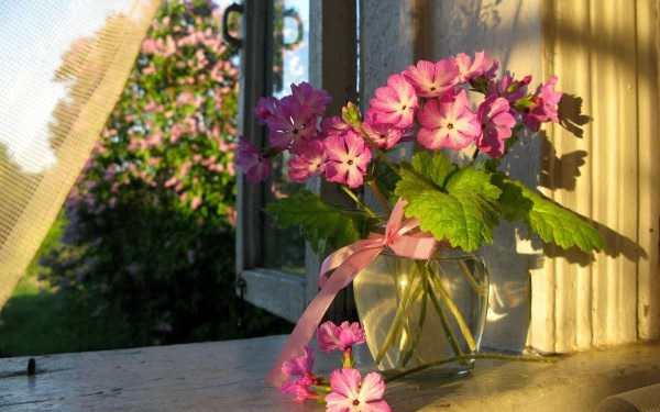 Flower Vase Window HD Wallpaper
