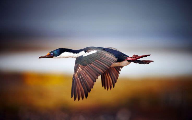 Flying Birds Blurred Background