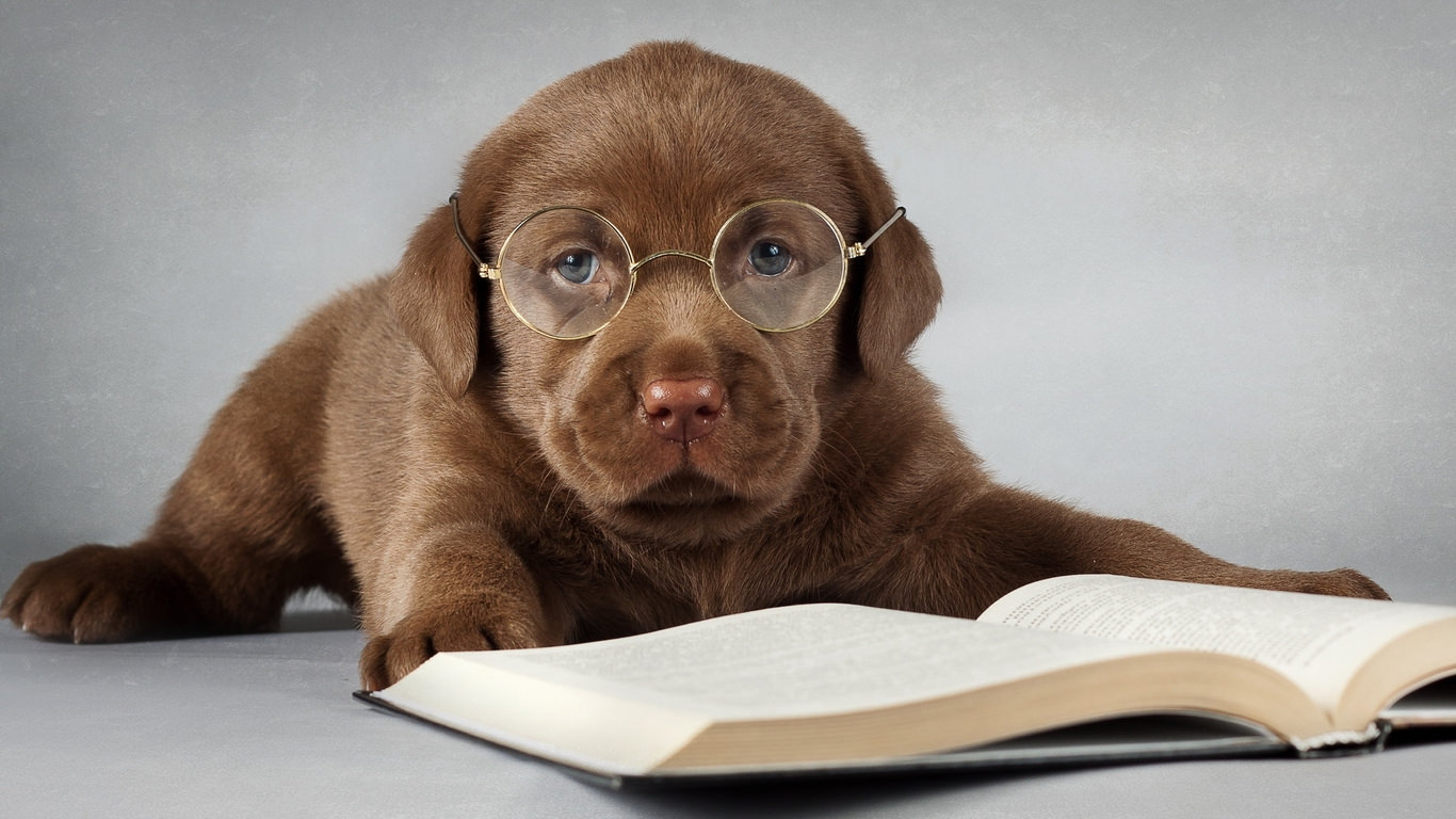 Funny dog Eyeglasses Studying Book