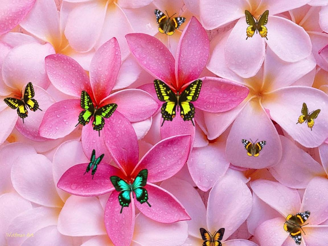 Girly Butterfly Wallpaper