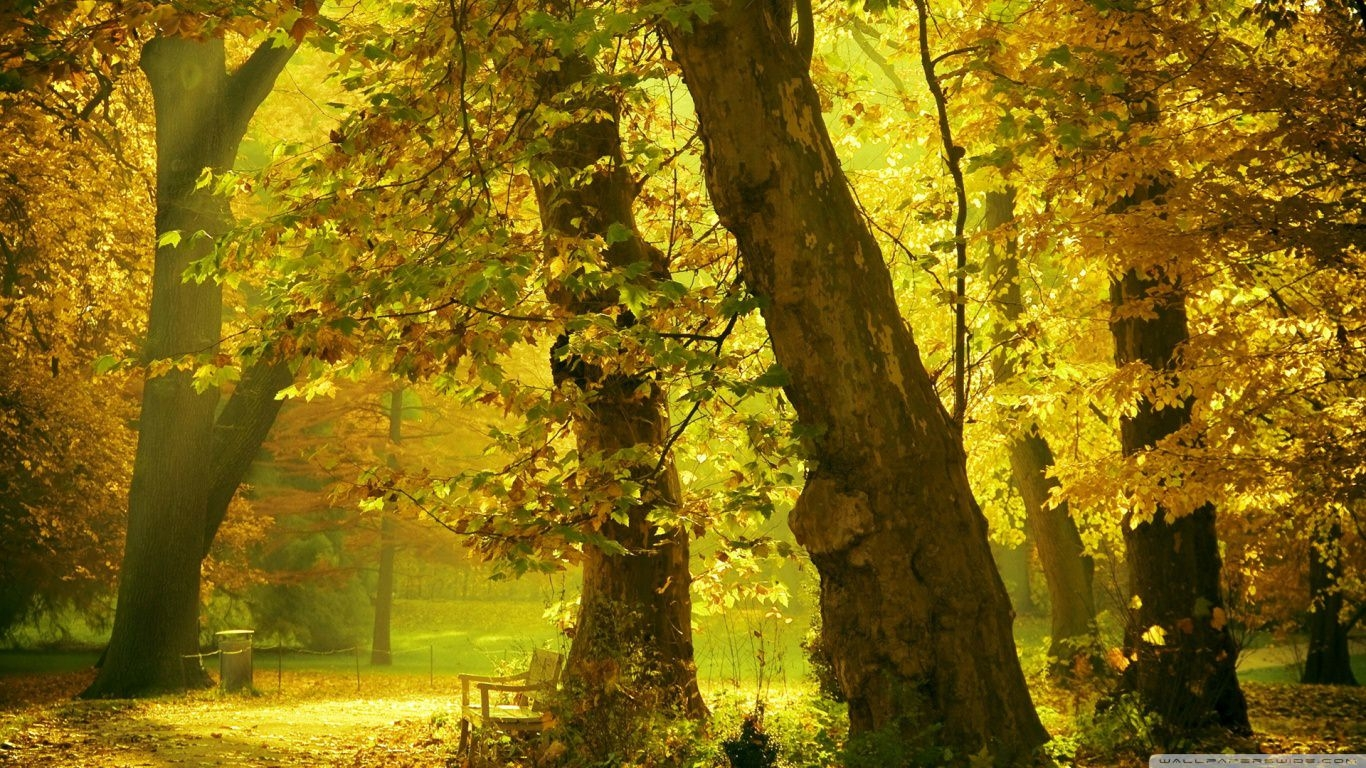 Golden Trees Wallpaper