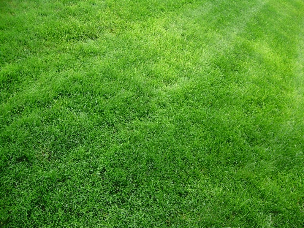 Green Grass Field Textured Background