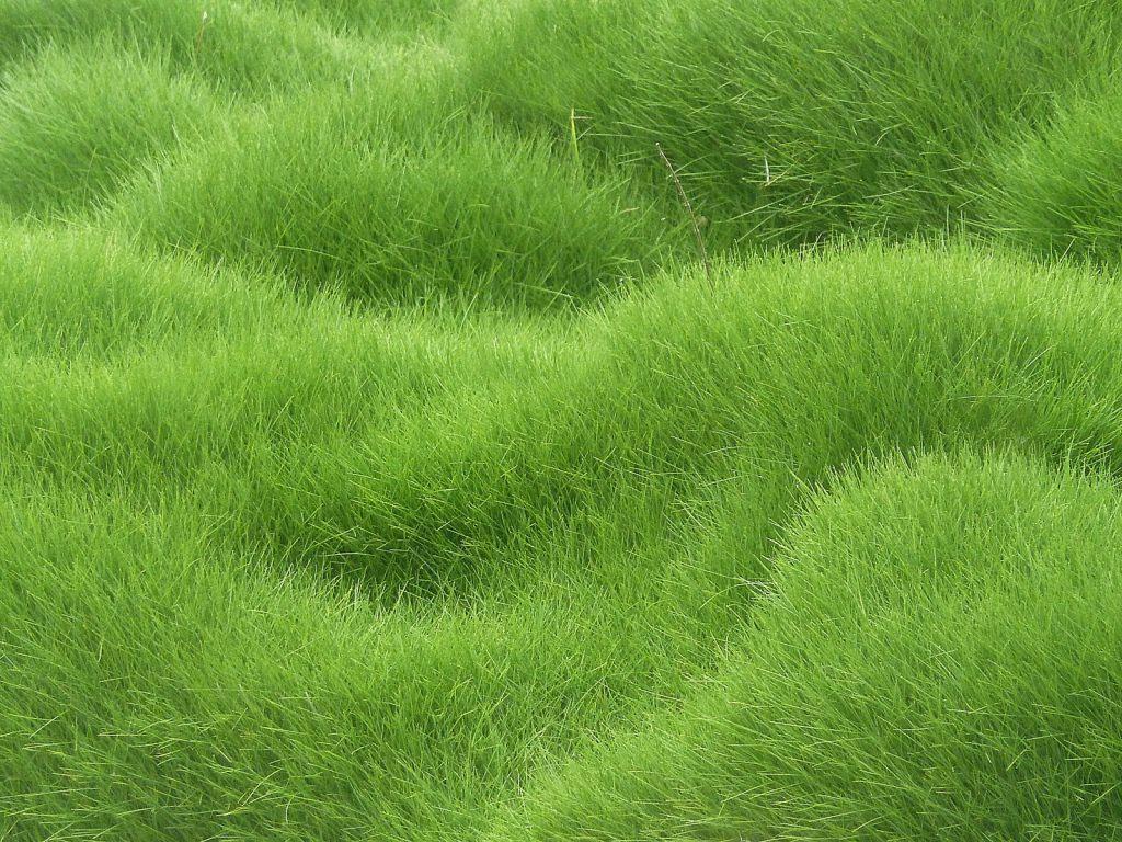 Green Grass Textured Background