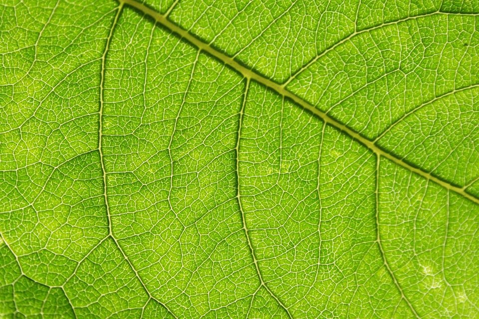 Green Leaf Textured Background