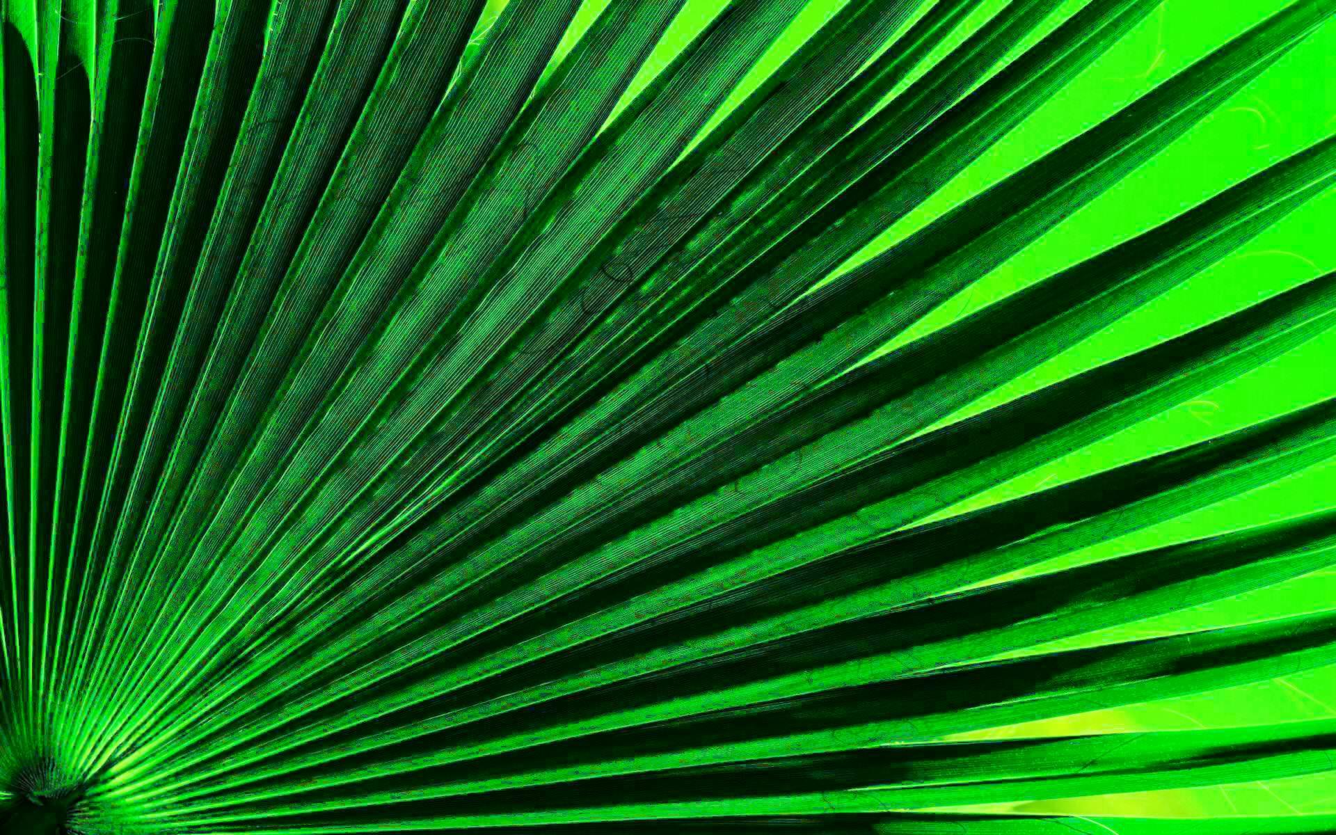 Green Leaf Tissue Textured Background