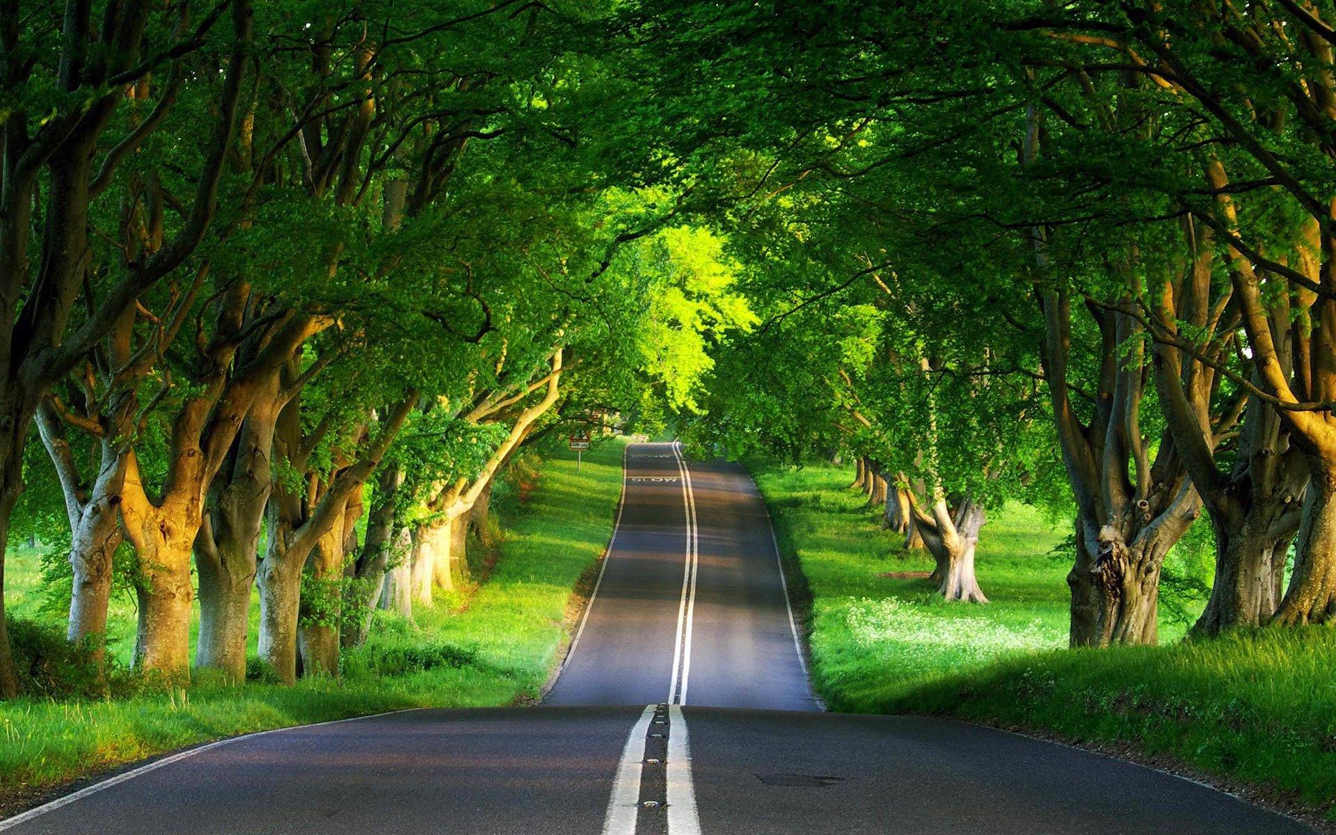 Green Nature Road Wallpaper