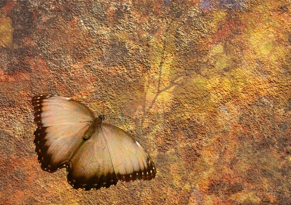 Grungy Background Butterfly Wallpaper