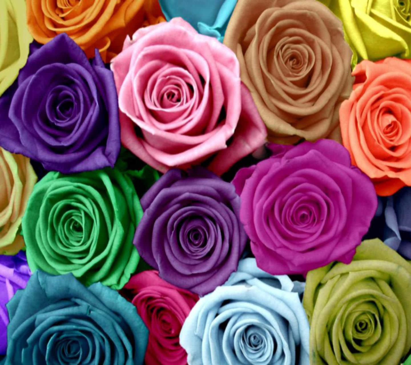 High resolution Colorful Roses Wallpaper