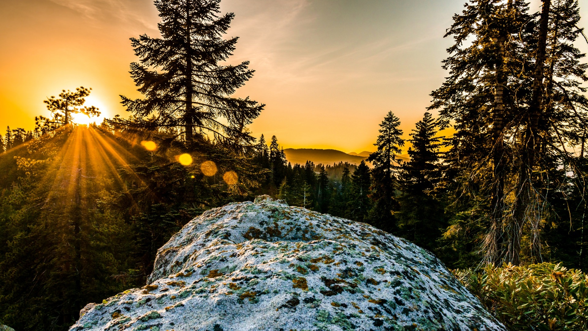 Hill Trees Sunshine Wallpaper