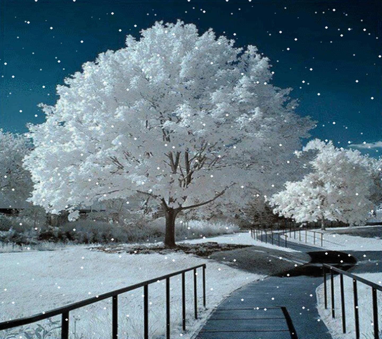 Landscape Snow Tree Wallpaper
