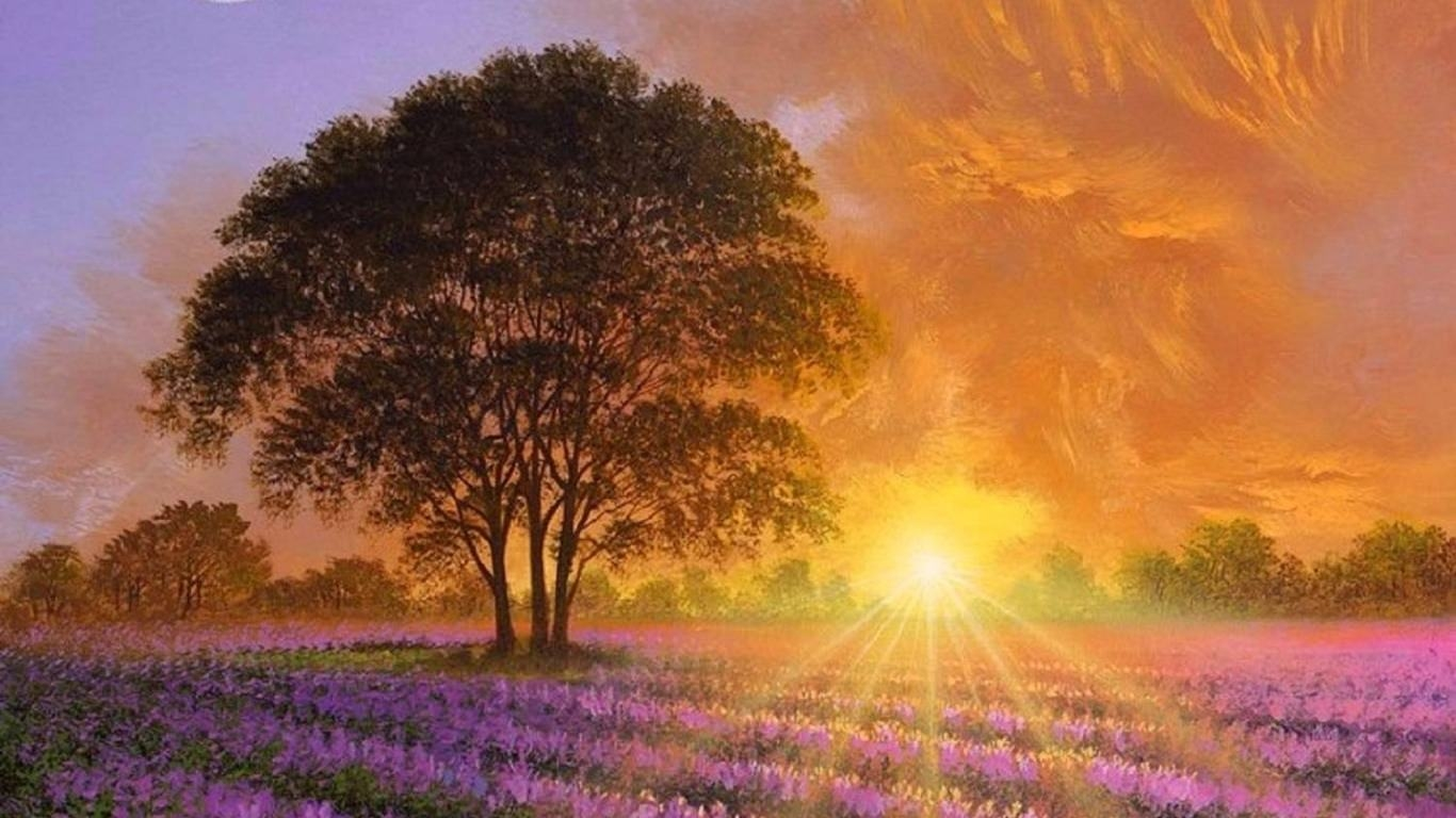 Lavender Sunshine Wallpapers