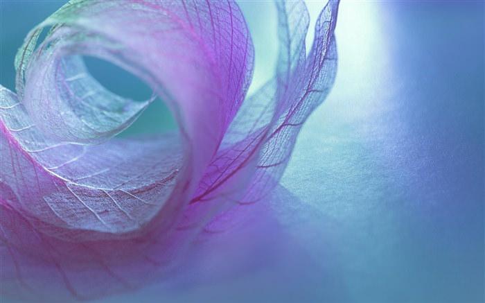 Leaf Vein Transparent Wallpaper
