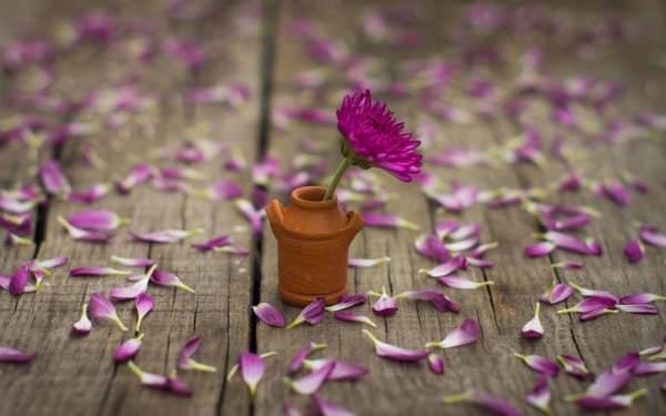 Mood Flower Pink Petal Vase