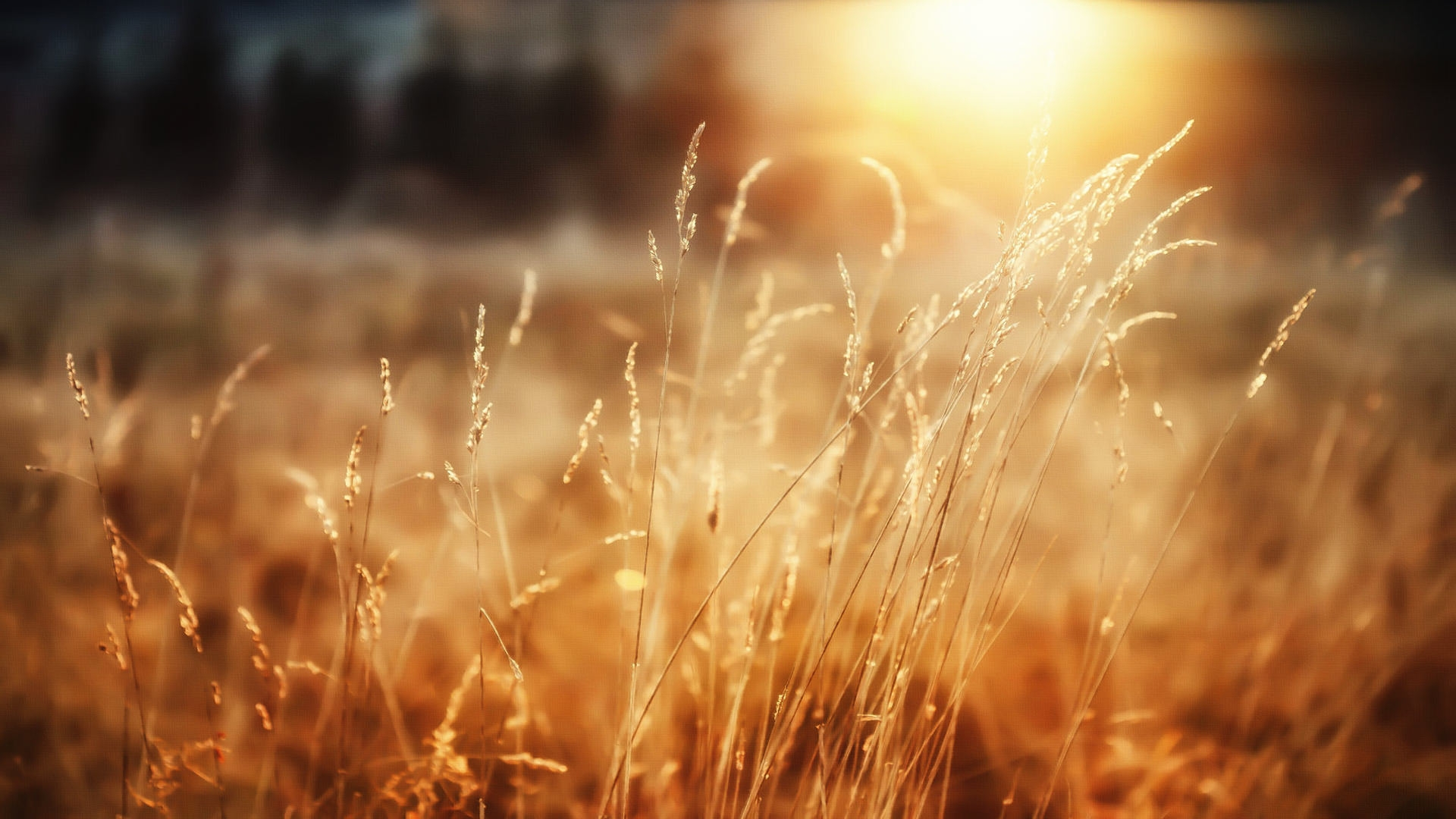 Morning Sunshine Wallpapers