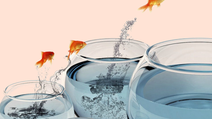 Moving Fishes Tumbler Wallpaper