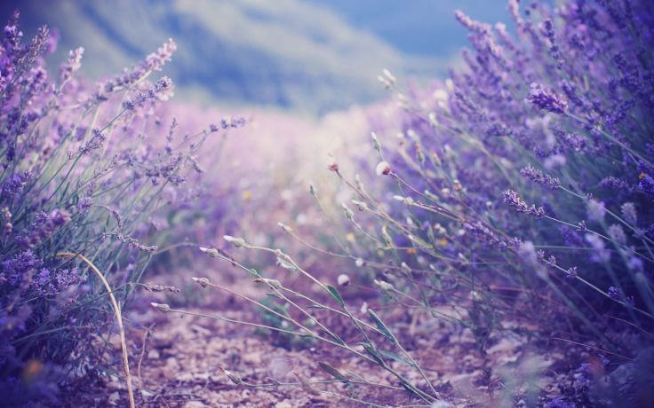 Nature Lavender Pastel Wallpaper