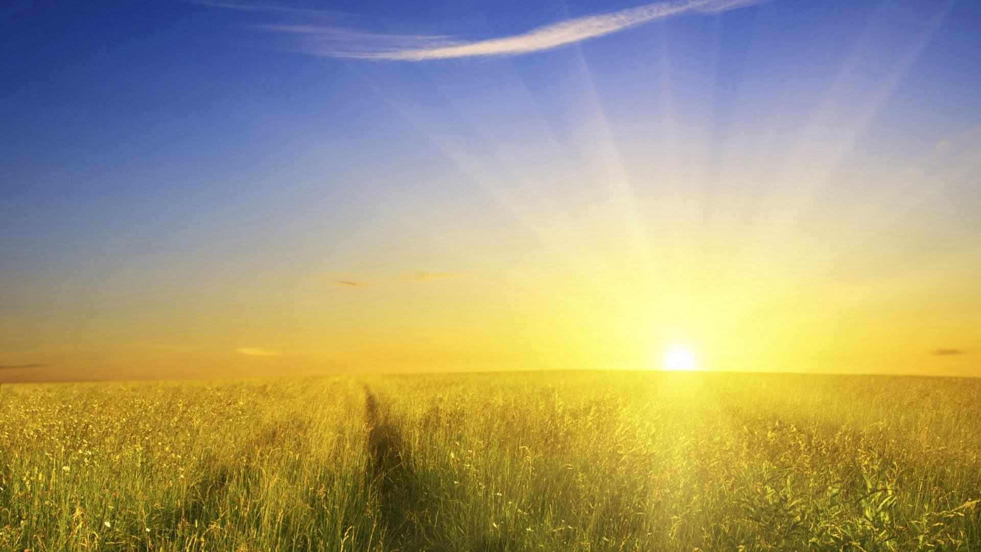 Nature glory Sunshine Wallpaper