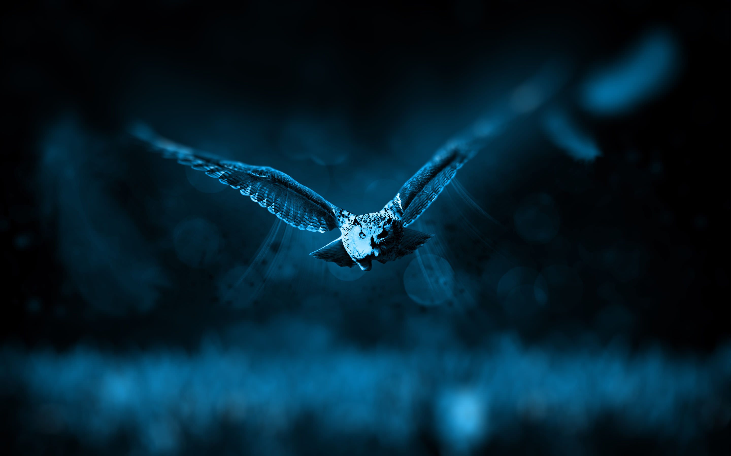 Night Owl Bird Wallpaper