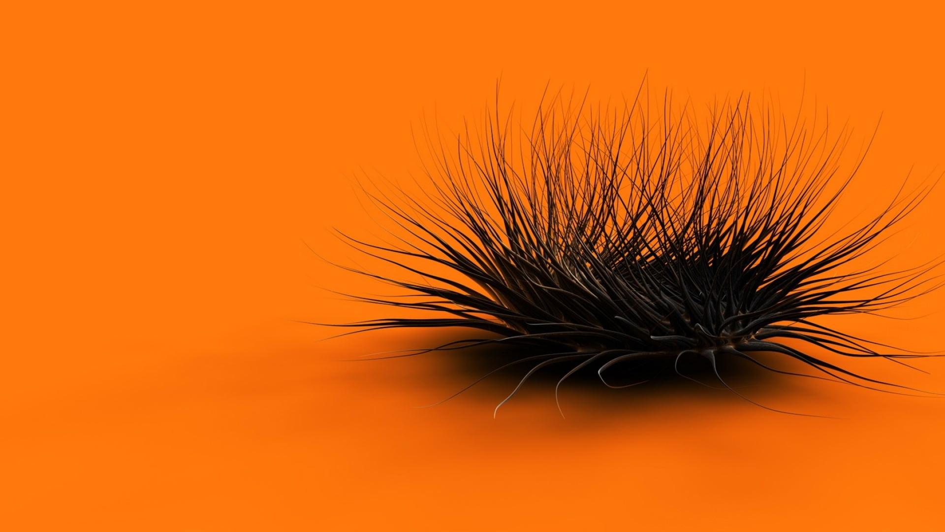 Orange Black Feathers Background
