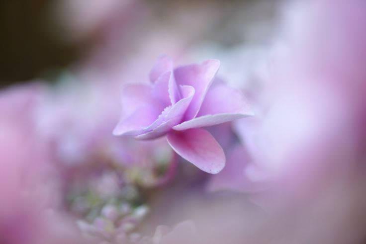 Pastel Blossom Petal Wallpaper