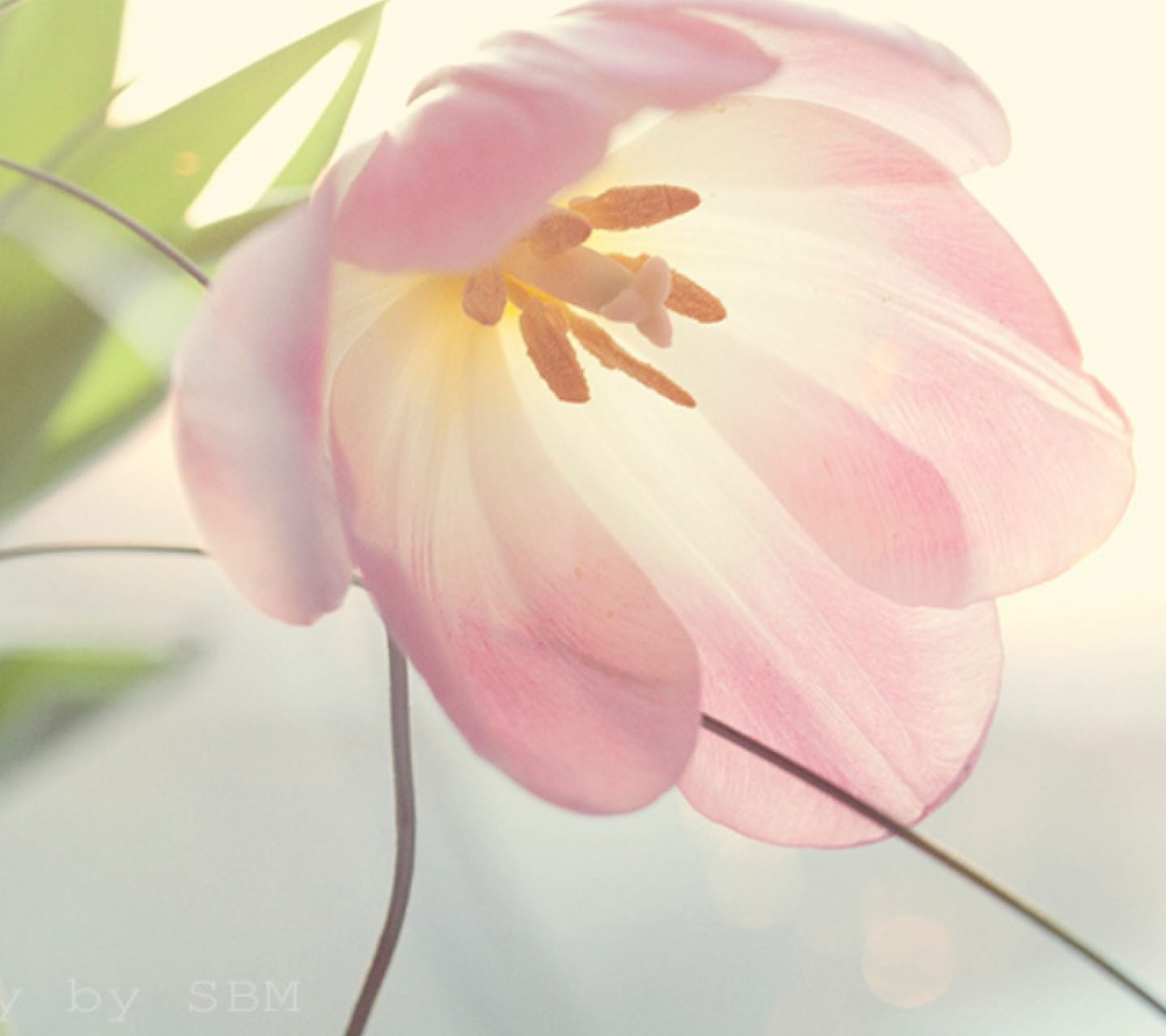 Pastel Pink flower Wallpaper