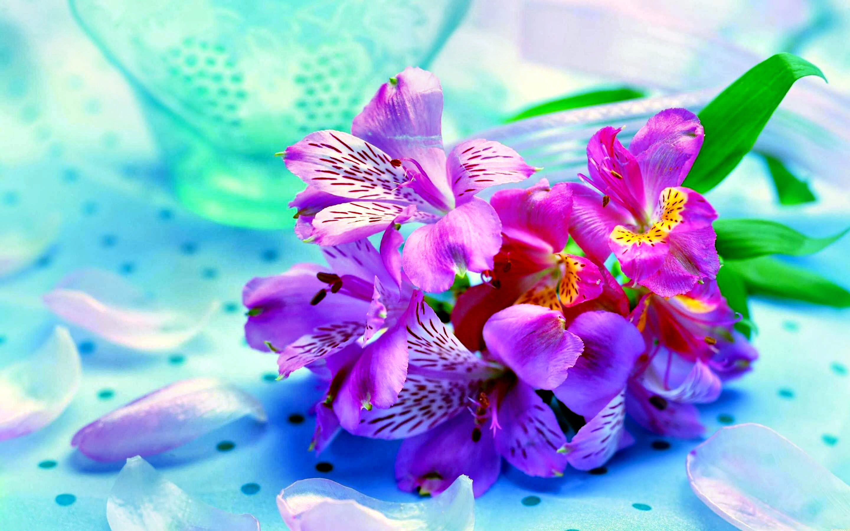 Pink Flower Orchid Wallpaper