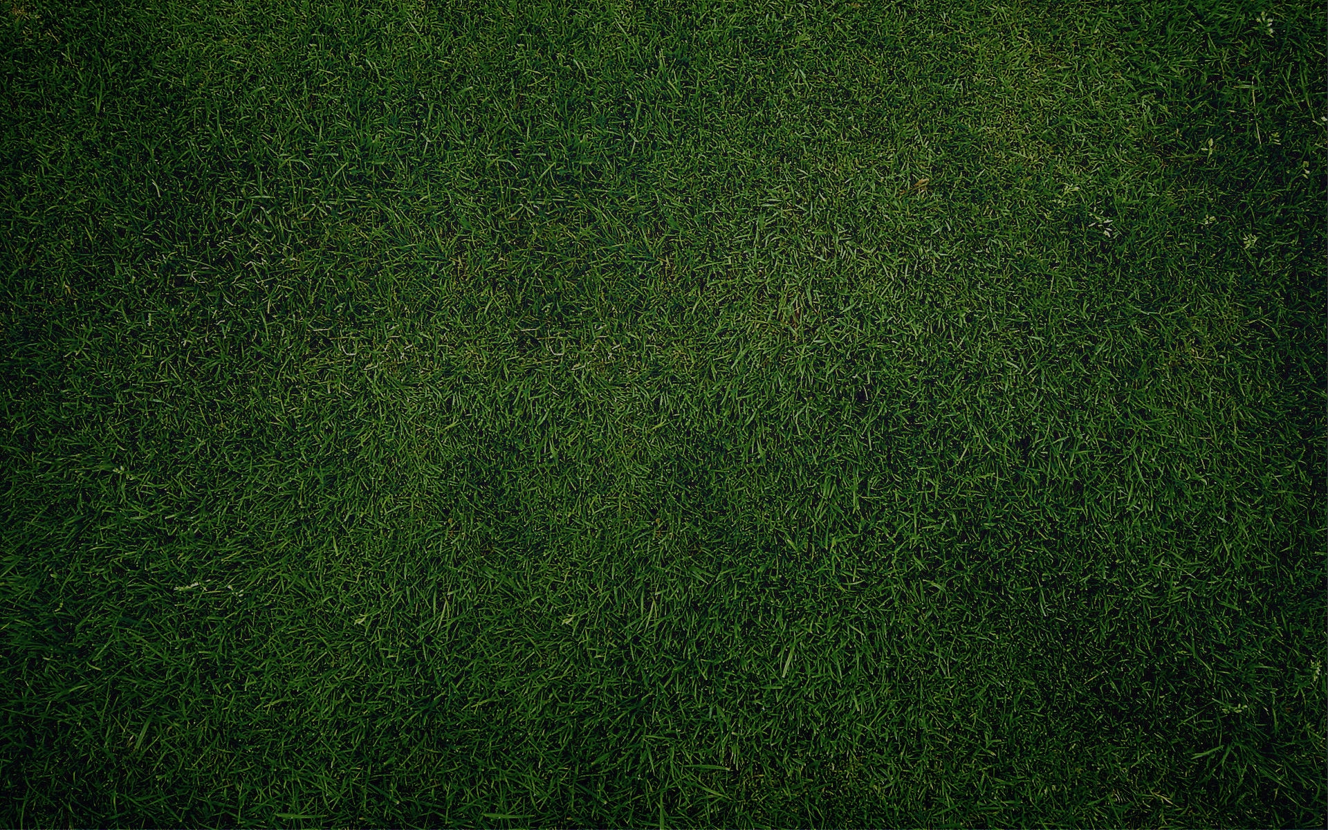 Plain Grass  Background