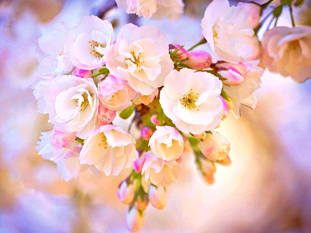 21 pretty wallpapers beautiful backgrounds images freecreatives pretty flowers wallpaper mightylinksfo