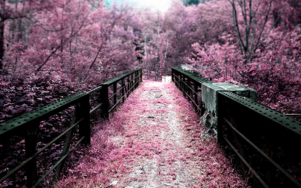 Purple  Autumn Path Background