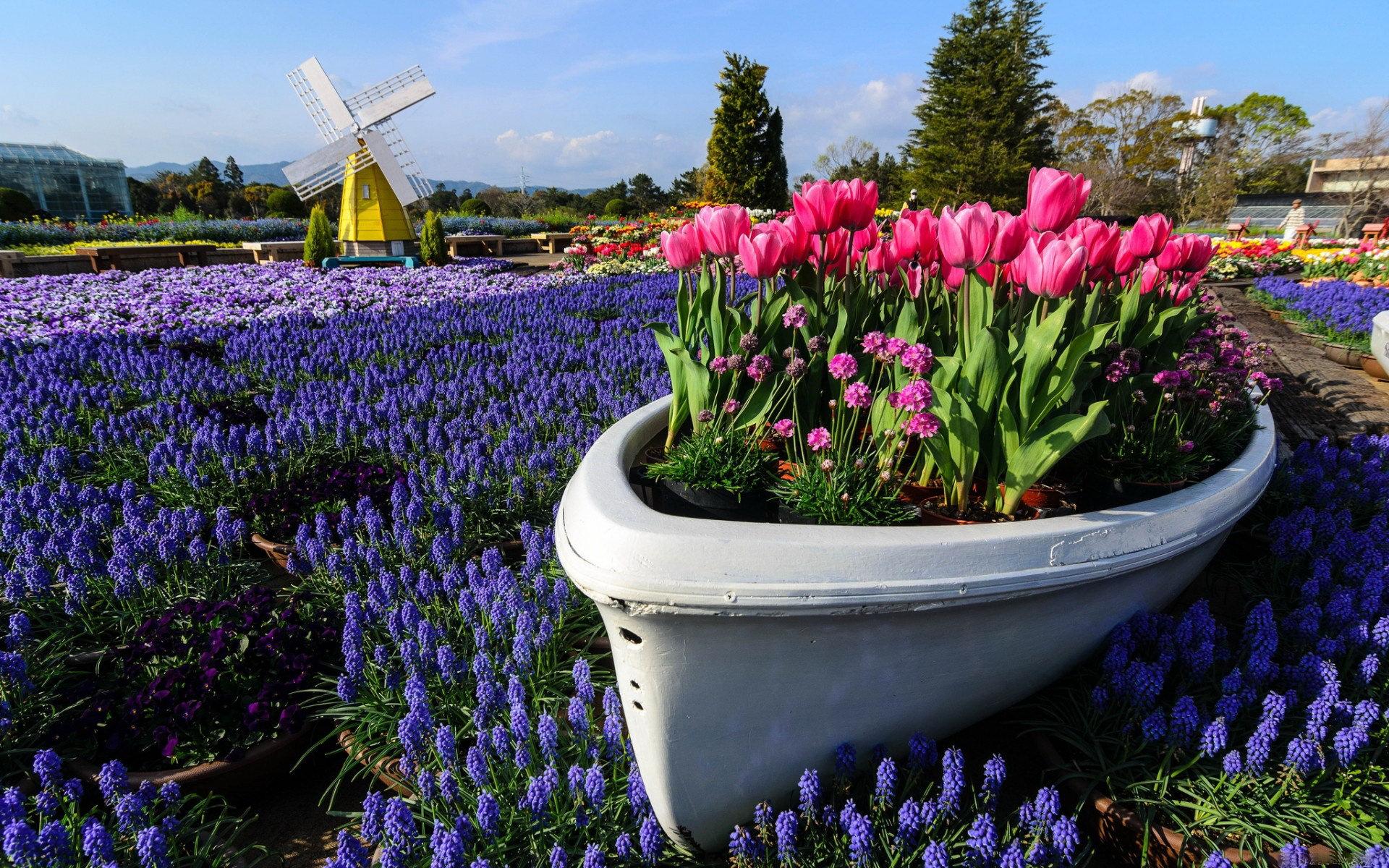 Purple Tulips Wallpapers