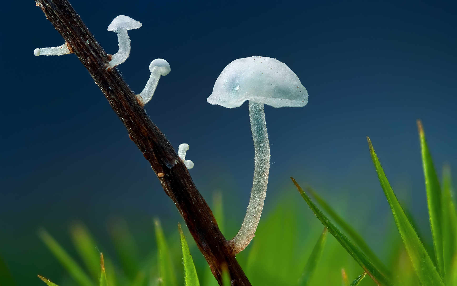 Quality Transparent Mushroom Wallpaper