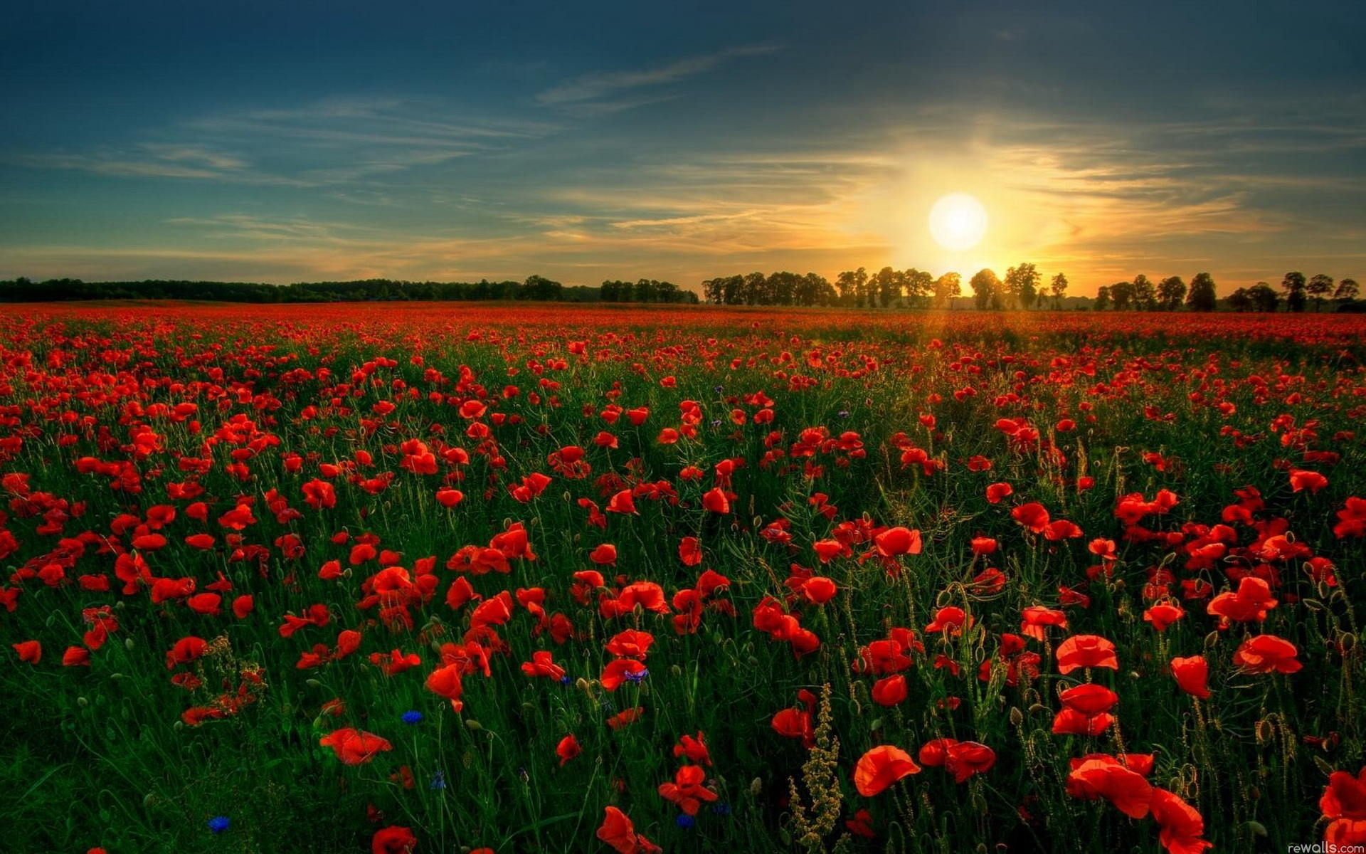 Red Flower GArden Wallpaper