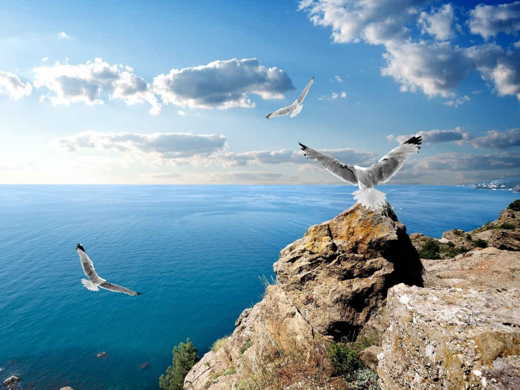 Seagulls Cloud Rocks Wallpaper
